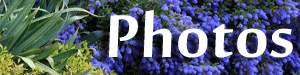 photos-button